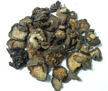 Dried Peyote (Lophophora williamsii)