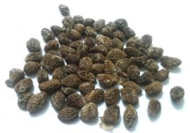 100 Eboka seeds